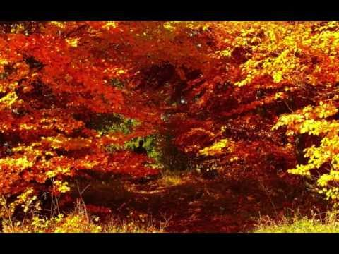 Chillout-Musik - Lounge Musik - Entspannungsmusik - Oktobergold - Indian Summer Travel Video