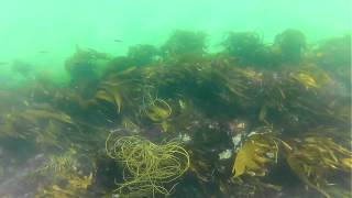 Snorkelling in Cornwall at Talland with Adrian & Kay Kendall