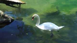 Алупка - парк, воронцовские пруды(, 2013-12-04T19:24:58.000Z)