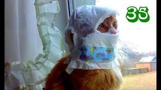 Приколы с котами Самые смешные коты Смотреть коты Видео кошки смешное Видео коты Смешные животные