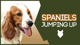 PUPPY TRAINING! Stop Your SPANIEL Jumping Up