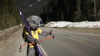 Charlie the Bulldog tries Skiing