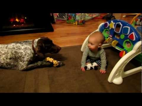 Baby boy laughs at dog barking