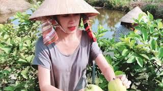 Về quê tham quan vườn Rau, Trái Cây sạch cùng Lý Hải Minh Hà