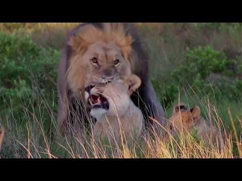 Sibuya Game Reserve - Safari Accommodation South Africa - Africa Travel Channel
