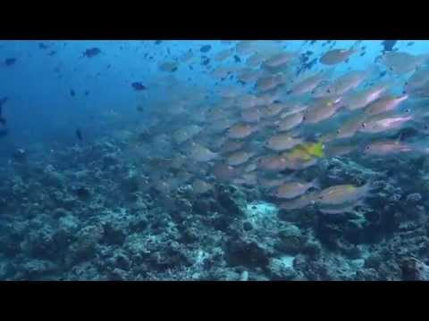 MALDIVES - Grand Sud avec Seafari & Sharkeducation