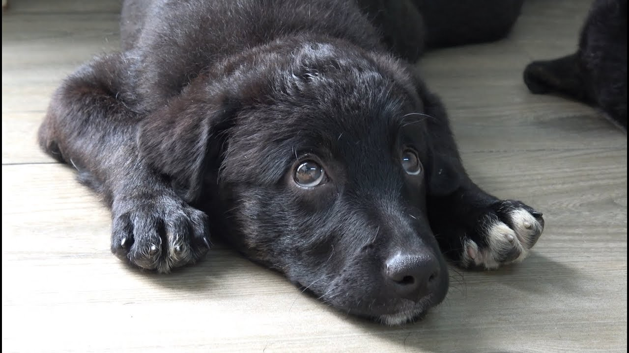 how-can-i-tell-this-dog-that-nobody-wants-to-adopt-her