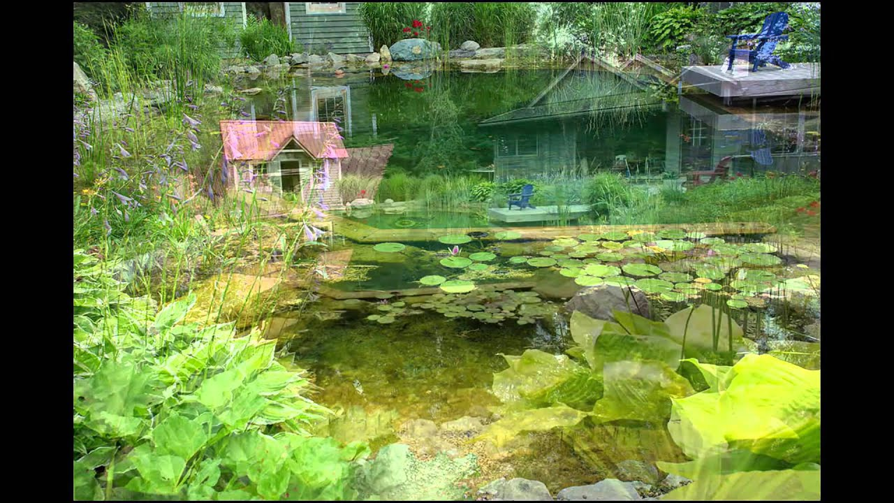 Natural Swimming Pools Created By John S Pools And Ponds No Chlorine Youtube