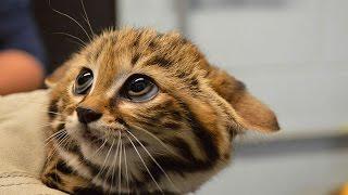 17 необычных котов, о существовании которых знают не все