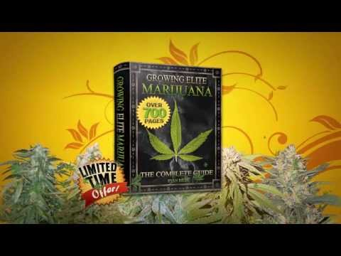 Complete Step By Step Guide To Growing Marijuana ! ( How To Grow Weed )