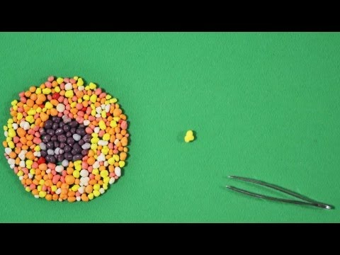 Video image: Making a TED-Ed Lesson: Animation