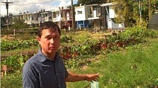 Urban Farm in Baltimore Grows Food & Teaches Community Gardening
