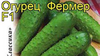 Огурец Фермер F1 (Огурец). Краткий обзор, описание характеристик, где купить семена cucumis sativus