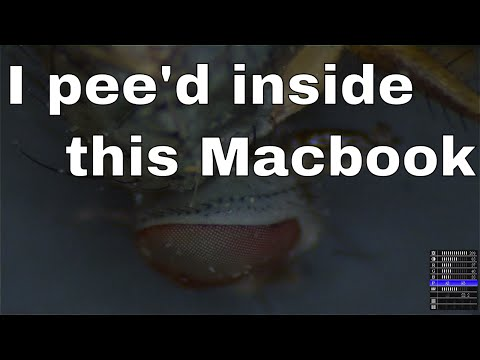 2016-10-23 Macbook Air killed by fly piss.