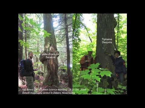 Frédérik Doyon (UOO) Dynamics of old-growth temperate forests in western Quebec
