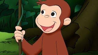 George O Curioso 🐵A Aventura de George na Amazonia🐵 Compilação 🐵 Desenhos Animados