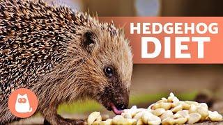 What Do HEDGEHOGS EAT? 🍎🦔 Full Hedgehog Diet!