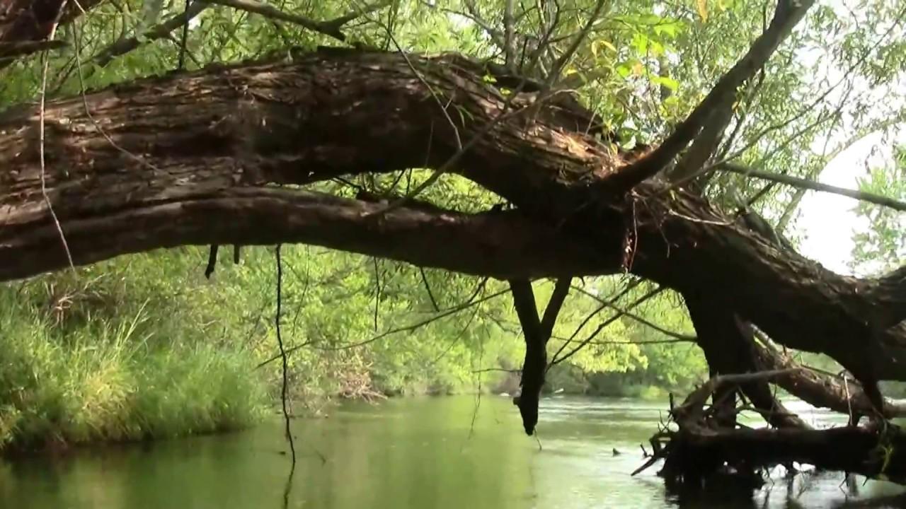 Y Elk River Mn Kayaking on the Elk Ri...