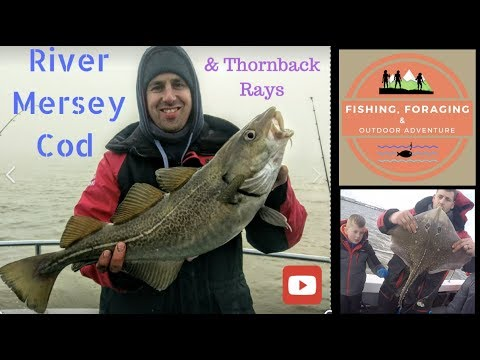 CATCHING COD & THORNBACK RAYS - Winter fishing in the Mersey estuary