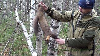 Охота на куницу сезон18/19г. или Случайная охота. Hunting for marten.