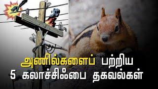 squirrel-special-story-hindu-tamil-thisai