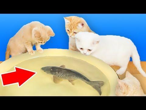 Reação Dos Gatos Ao Peixe Real Vivo