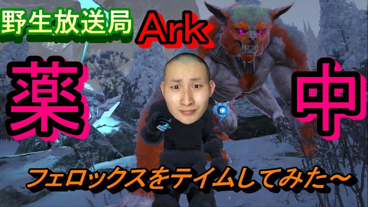 ロックス ark フェ