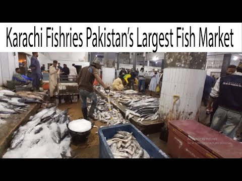 Karachi Fishery Largest Fish Market   Export Quality Fish & seafood   Current Price and Info