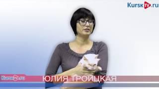 Кот по имени Кутузов ищет хозяев в Курске