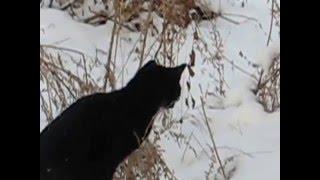 Кошка ловит мышь в прыжке.