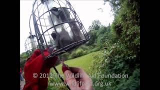Squirrel proof bird feeder...+1 squirrel!!!