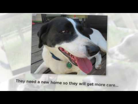 Border Collie Beagle Mix Dogs For Adoption New York
