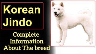 Korean Jindo. Pros and Cons, Price, How to choose, Facts, Care, History