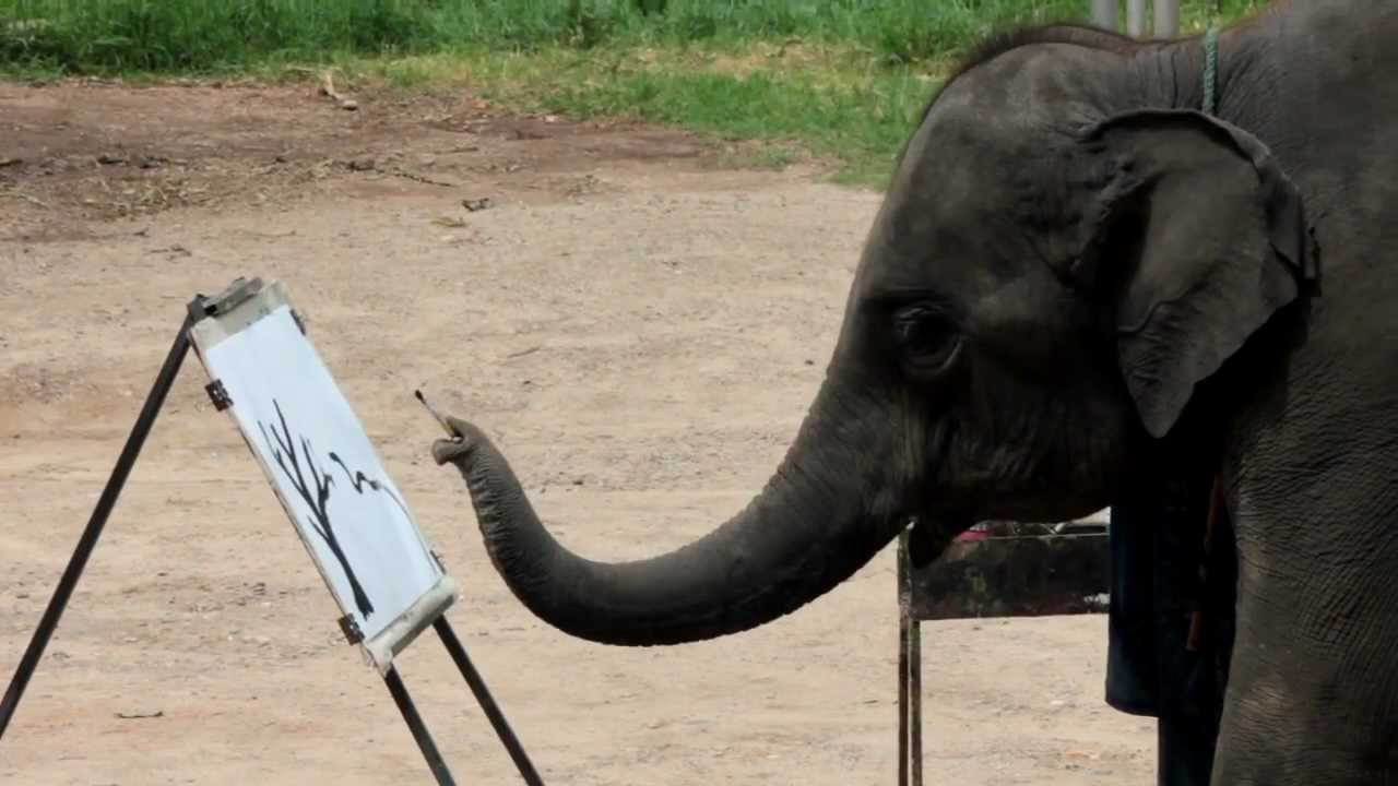 an analysis of kate goods article elephant artists heres why making an elephant paint is cruel not c