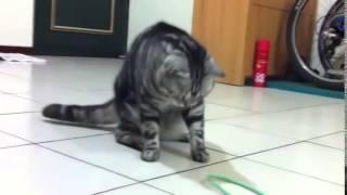 Приколы с кошками, приколы с котами. Самые Смешные Приколы с Кошками!