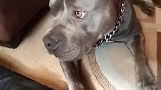 The Fuck boy dog