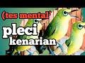 Masteran Pleci Rasa Kenari Paling Dicari  Mp3 - Mp4 Download