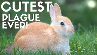 Langley, the island town with a cute bunny plague and touring Fort Casey | MOTM VLOG 75