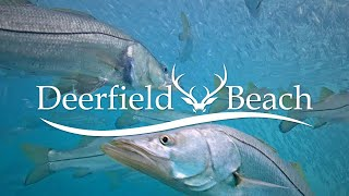 LIVE Deerfield Beach, FL USA Underwater Camera
