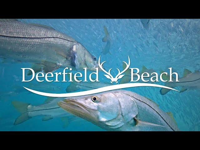 LIVE Deerfield Beach, FL USA Underwater Camera