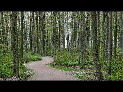 Schmidt Woods Trail Springtime, Wilmot Township Canada