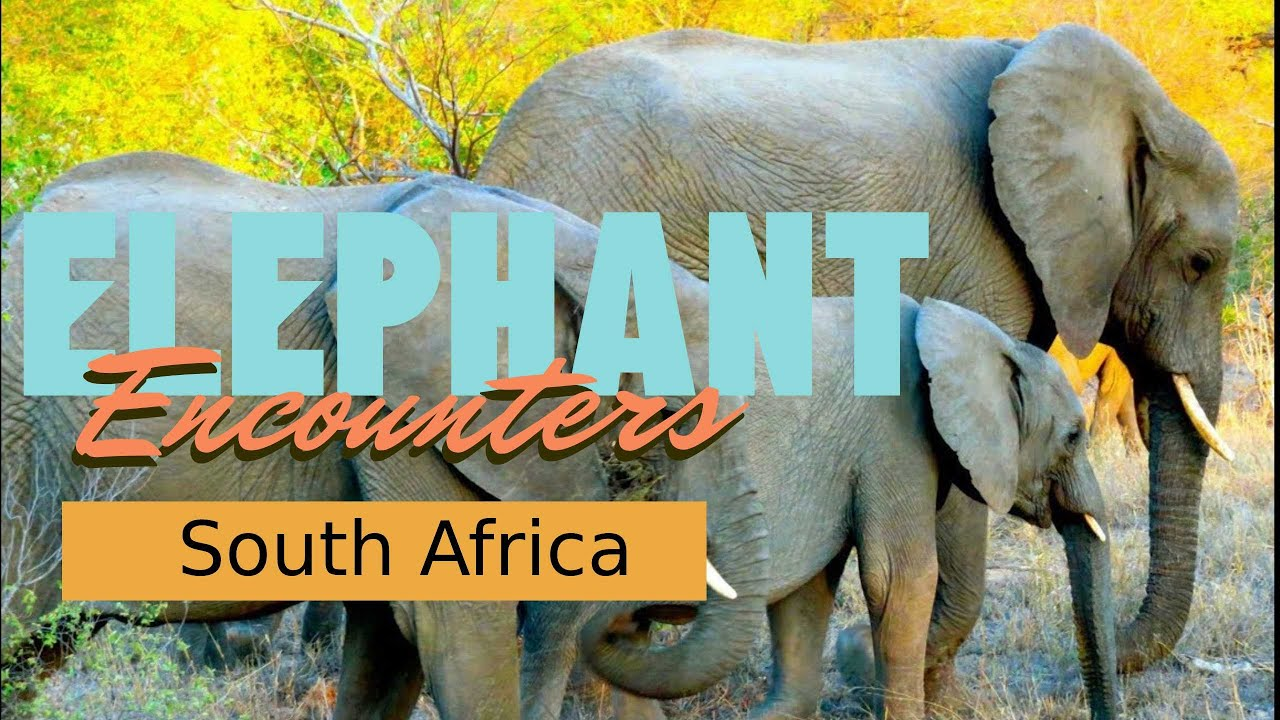 Elephant Encounters: South Africa