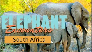 Elephant Encounter South African