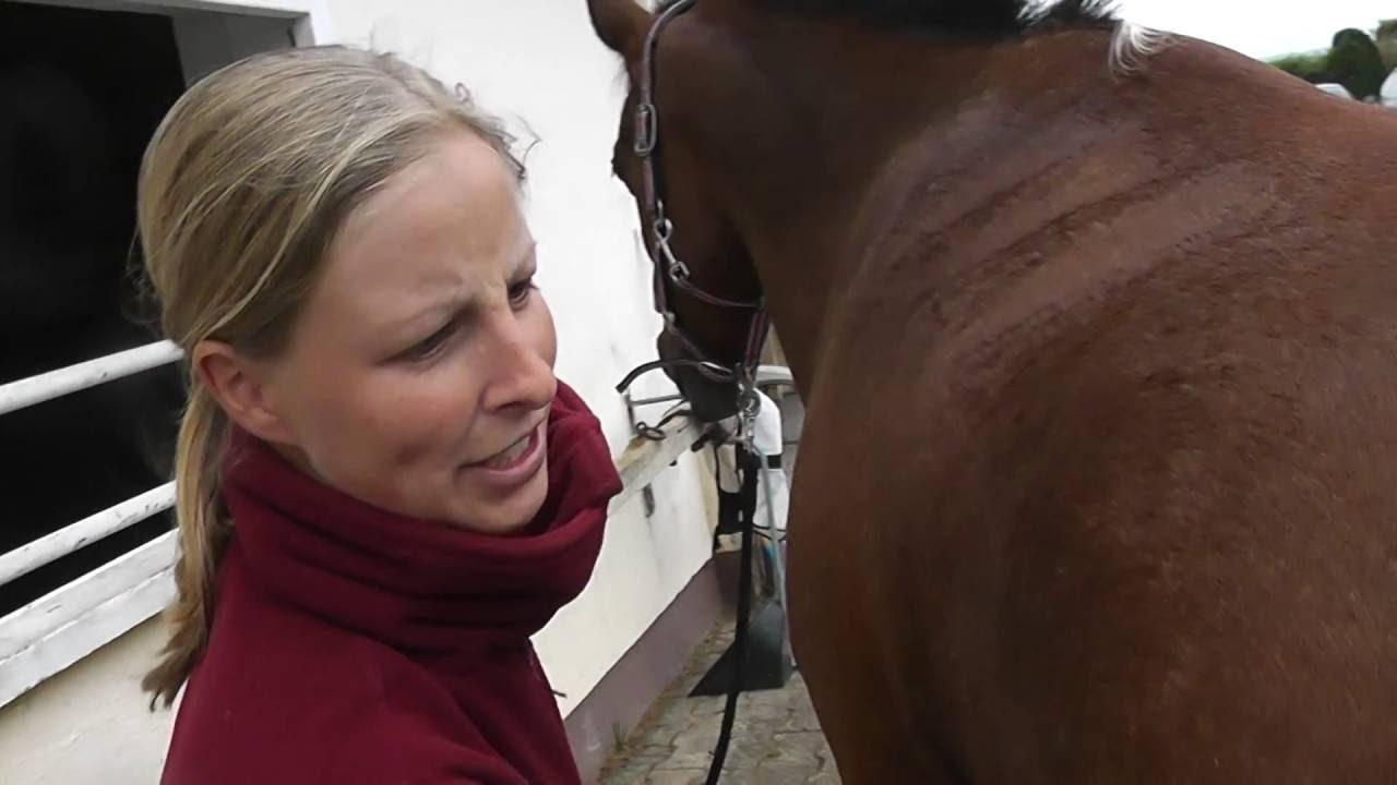Pferdevidios