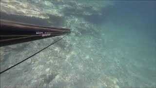 zıpkınla balık avı 2