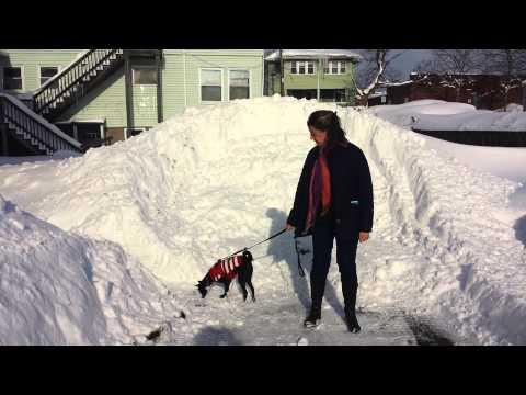 """Feb.9,2015 snowstorm Quincy, Ma. 24"""""""
