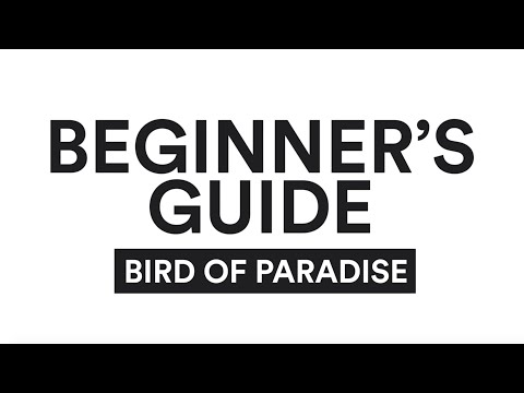 a-beginner's-guide-to-the-bird-of-paradise-yoga-pose