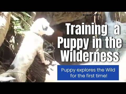 How to Wilderness Train a Puppy!
