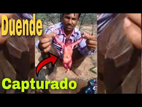 Download CAPTURAN A UN DUENDE REAL en una jaula ( nuevo video viral)
