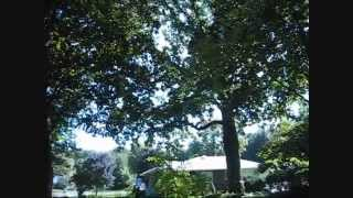 Planting  a Tree under Shade Trees-Miniature Magnolia..